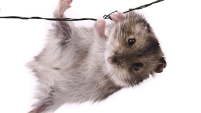 Waspada, Tikus di Rumah Dapat Membawa Penyakit pada Anak