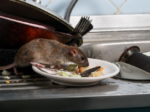 Usir Tikus dari Dapur Paling Jitu Pakai Lem Super Lengket