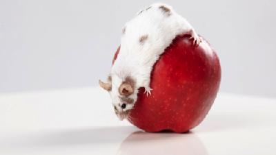 Yuk, Ketahui Cara Mengusir Tikus Agar Makanan Tetap Sehat