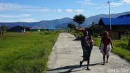 6 Tips Menghindari Malaria, Ini Obat Tradisional Orang Papua