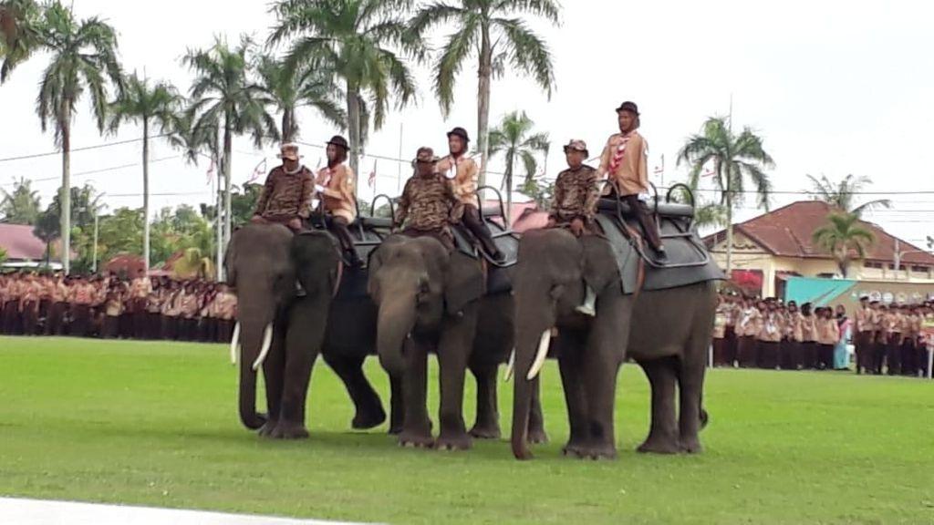3 Gajah Jinak Ikut Kemah Pramuka Petikawan di Riau