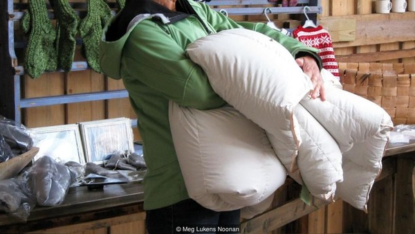 Wisatawan bisa ke sana naik pesawat 1,5 jam disambung perahu 1 jam ke Pulau Lanan. Selimut eider amat cocok untuk musim dingin dan yang paling mahal dijual lebih dari USD 15.000 atau setara Rp 226,1 juta (Meg Lukens Noonan/BBC Travel)