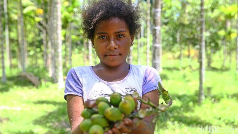Bocah 10 tahun asal Jayapura bernama Nobi gemar mengunyah buah pinang. Saking gemarnya, Nobi sampai memetik sendiri buah tersebut di puncak pohon.
