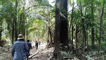 Pepohonan Ditebang dan Hewan Diburu di Hutan Perbatasan