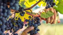 Anggur hingga Sereal Jagung Paling Banyak Diimpor RI di September