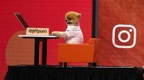 Anjing Selebgram Ini Dapat Ratusan Juta Rupiah Sekali Posting