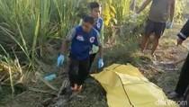 Geger Penemuan Mayat Seorang Pemuda di Kebun Tebu Jombang