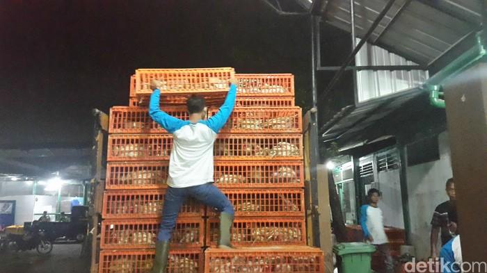 Petugas dari RPUH (Rumah Potong Hewan Unggas) melakukan pemeriksaan Surat Keterangan Kesehatan Hewan dari daerah asal serta mengecek banyaknya jumlah ayam. (Foto: detikHealth/Khadijah Nur Azizah)