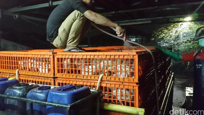 Cleaning stage dilakukan terhadap mobil pengangut ayam dengan disinfektan. (Foto: detikHealth/Khadijah Nur Azizah)