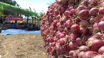 Harga Terjun Bebas, Petani Bawang Merah Gelar Doa Bersama