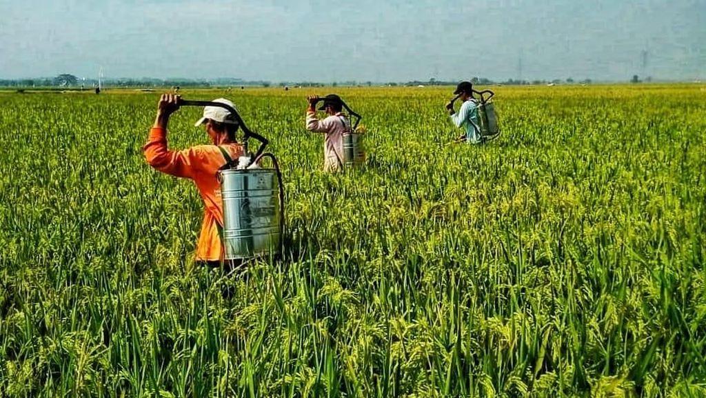Kesejahteraan Petani Diklaim Meningkat Dibanding Tahun Lalu