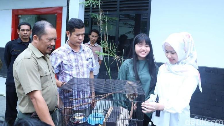 Anak Gubernur Sumsel Serahkan Kukang Seharga Rp 350 Ribu ke BKSDA