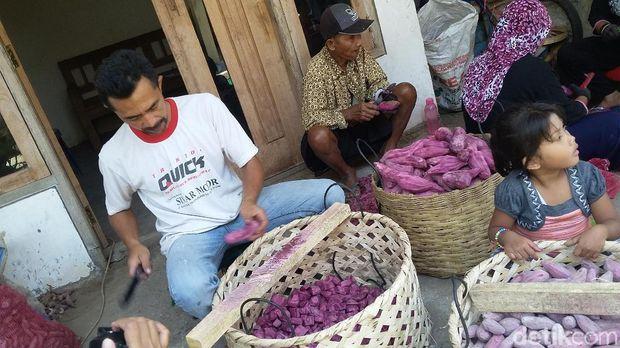 tape ubi ungu dari bondowoso
