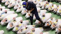 Begini Suasana Lelang Ikan Tuna Pertama di Pasar Tsukiji yang Baru