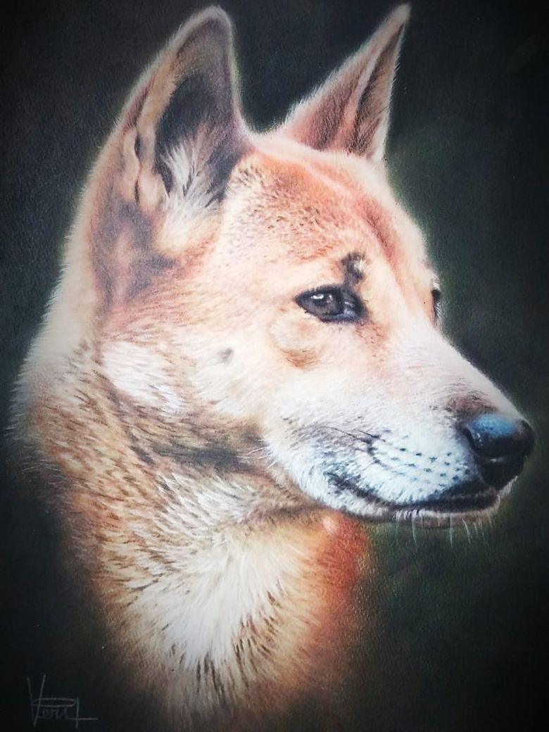 Anjing Mirip Srigala Ditemukan di Dataran Tinggi Papua