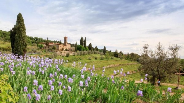 Bunga-bunga ini tumbuh di Tuscany, di mana telah dibudidayakan dan dijual di toko-toko. Dikelilingi oleh lereng bukit curam, ada lahan bunga dan pabrik yang telah beroperasi selama hampir dua abad (Kokophotos/Alamy/BBC Travel)