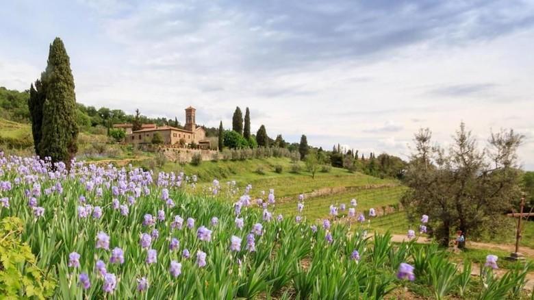 Pertanian iris di pinggiran Florence, Italia (Kokophotos/Alamy/BBC Travel)