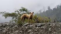 Papua Punya Banyak Hewan Misterius, Tapi...