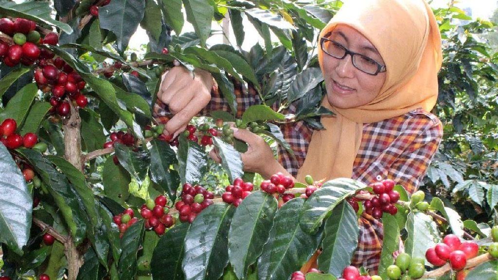 Ini Dua dari 10 Besar The Best Indonesian Coffee
