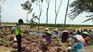 Bantu Petani, Polisi di Brebes Borong Bawang Merah