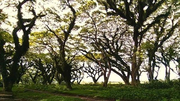 Hutan di Banyuwangi