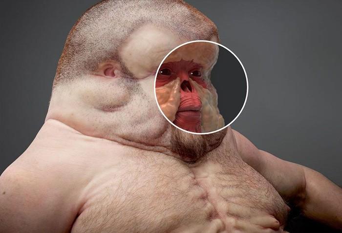 Graham punya wajah yang cenderung datar dan banyak lemak untuk lebih baik menyerap energi benturan. (Foto: ABC Australia/TAC)