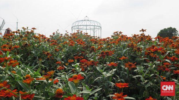 Chung She Flower Garden, Taman Bunga Fotogenik di Taiwan