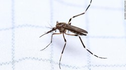Populasi nyamuk memang bisa meledak usai musim hujan. Nah di Carolina Utara, Amerika Serikat, dilaporkan mulai bermunculan nyamuk raksasa usai badai.