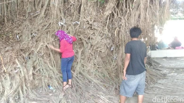 Mengikat tali plastik ke akar pohon beringin di Loang Baloq Mataram (Harianto Nukman/detikTravel)