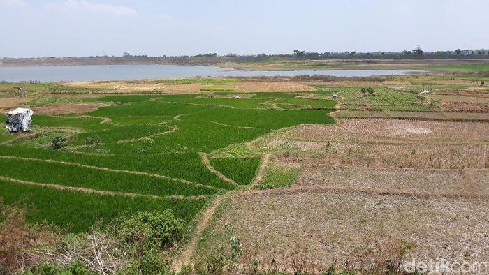ilustrasi lahan pertanian (Foto: Bayu Ardi Isnanto/detikcom)