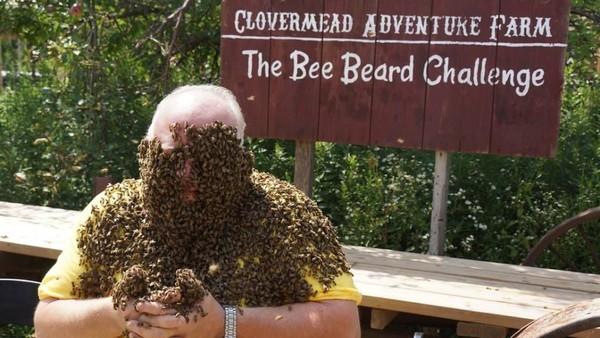 Foto: Peserta diadu membuat bentuk jenggot dari lebah yang berkumpul, kemudian difoto. Foto tersebut diunggah ke Facebook Clovermead Adventure Farm, yang paling banyak dapat voting menjadi juara (Clovermead Adventure Farm/Facebook)