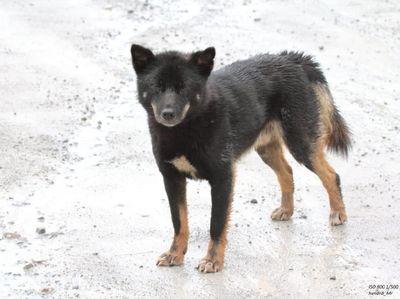 Kata Peneliti Tentang Hewan-hewan Misterius di Papua