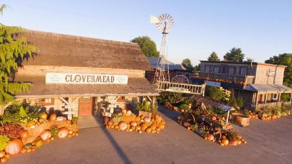 Foto: Selain kompetisi jenggot lebah, banyak aktivitas seru lainnya buat turis di Clovermead Adventure Farm (Clovermead Adventure Farm/Facebook)