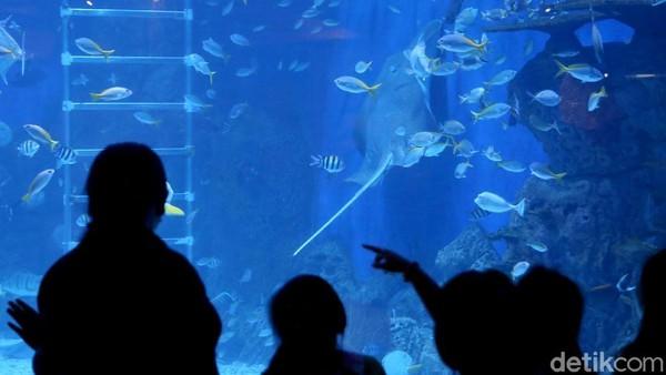 Jakarta Aquarium merupakan sebuah tempat wisata edutainment dengan berbagai koleksi biota laut dan satwa lainnya yang berlokasi di pusat perbelanjaan Neo Soho, Jakarta Barat. (Agung Pambudhy/detikcom)