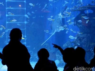 Melihat Alam Bawah Laut, Tapi dalam Mal di Jakarta