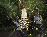 Laba-laba Kayu, Binatang Seram yang Jadi Makanan Populer di Vietnam