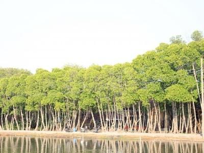Mangrove Morodemak, Surga Tersembunyi di Pesisir Pantai Demak
