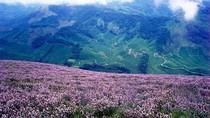 Foto Bunga Terlangka di Dunia, Mekar 12 Tahun Sekali