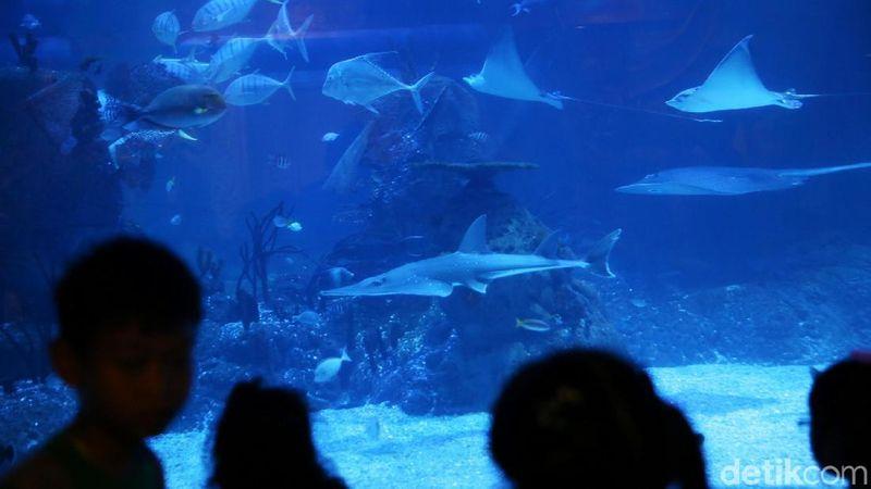 Inilah Jakarta Aquarium, akuarium dengan koleksi berbagai 600 satwa di Neo Soho, Jakarta Barat (Agung Pambudhy/detikTravel)