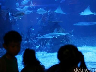 Hewan Laut Unik dan Aneh Hadir di Jakarta Aquarium, Seperti Apa Ya?