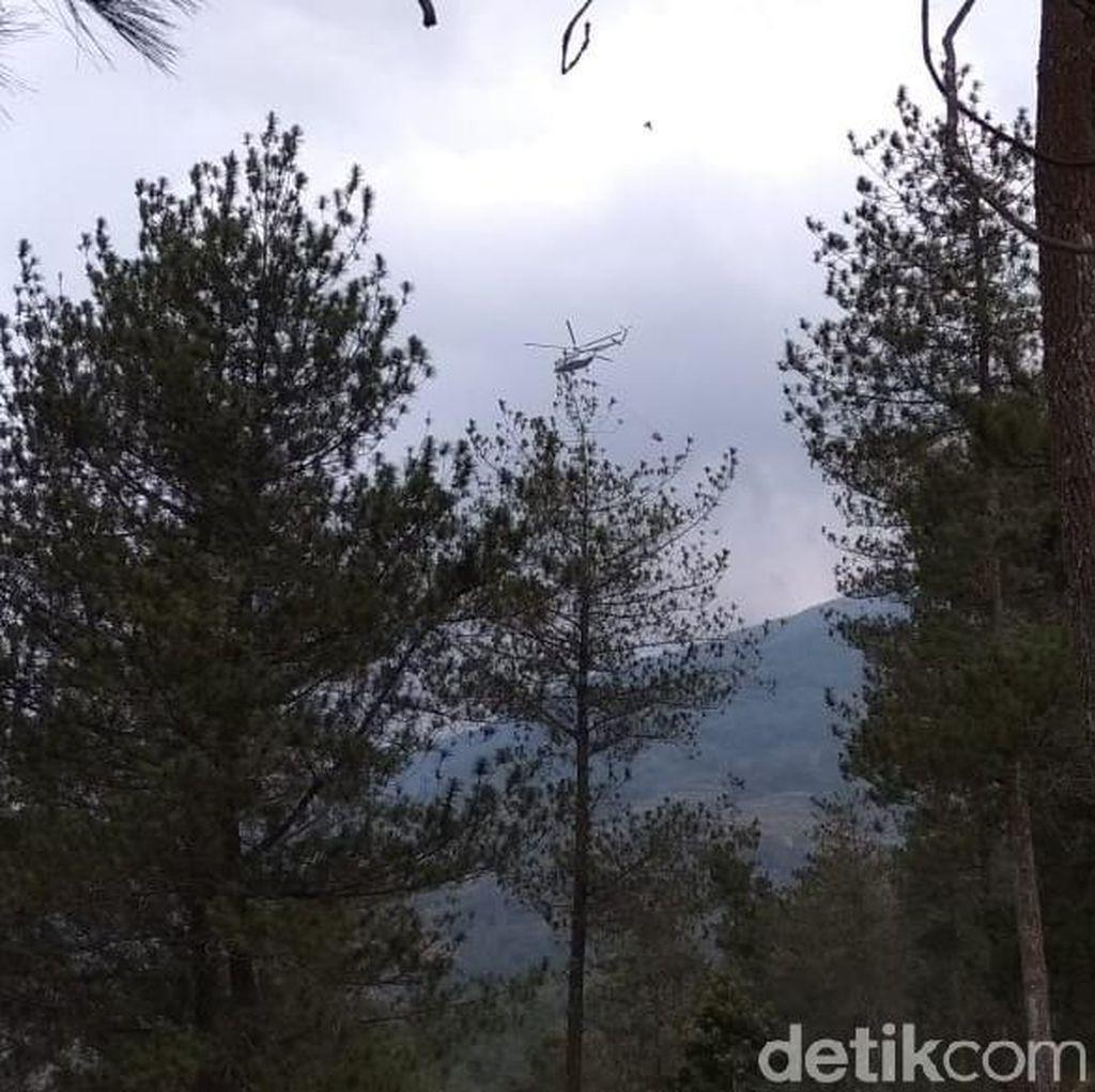 Usia Tanaman yang Terbakar di Gunung Merbabu hingga Belasan Tahun