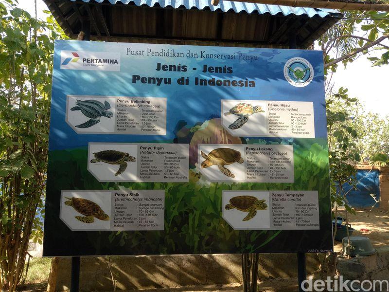 Inilah Pusat Pendidikan dan Konservasi Penyu yang terletak di kawasan Serangan, Denpasar Selatan (Aditya/detikTravel)