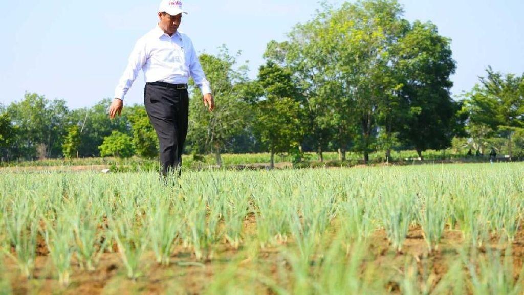 Mentan Dorong Kalsel Ekspor Bawang Merah ke Filipina