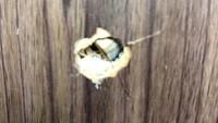 Peluru di F-PD dan F-PAN Kemungkinan dari Tembakan Hari Senin