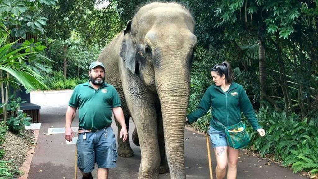 Kebun Binatang Perth Tidak Akan Pelihara Gajah Lagi