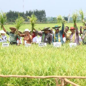 Bagaimana Pemanfaatan Lahan Rawa untuk Pertanian di Musim Hujan?