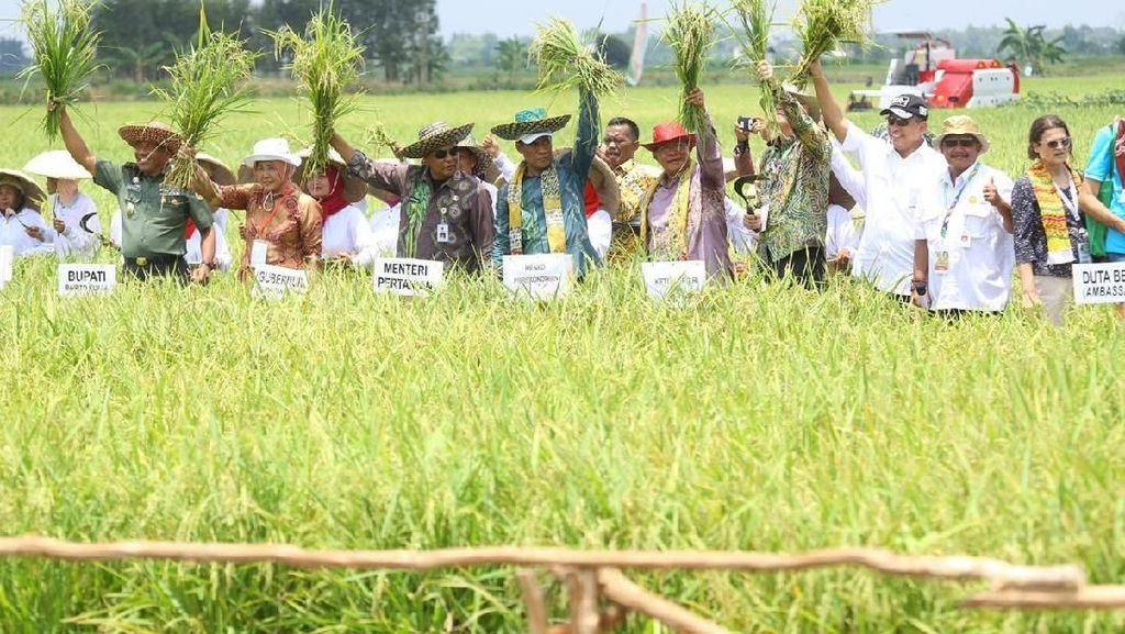 Kementan Sebut Pola Mina Padi Hemat Rp 15 Juta per Hektare