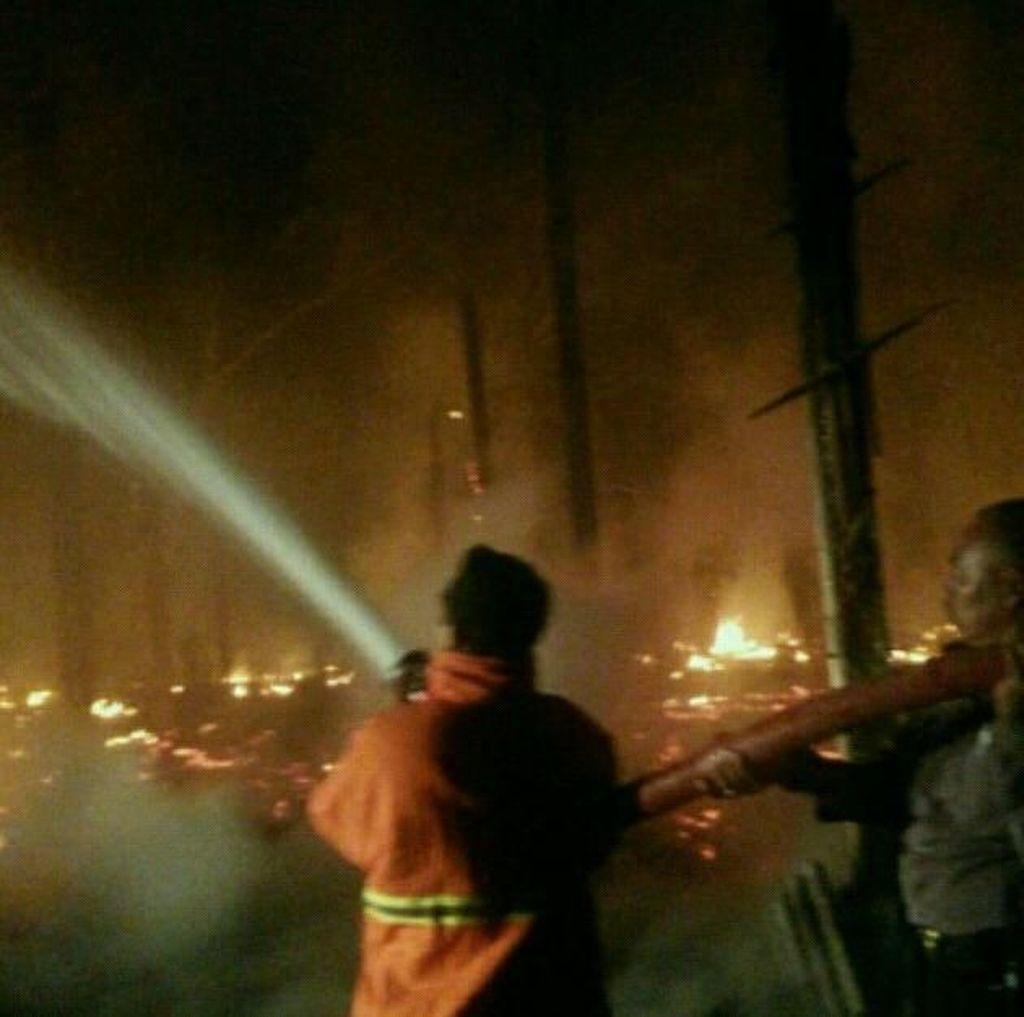 Kandang Ternak di Blitar Ludes Terbakar, Ribuan Ayam Terpanggang