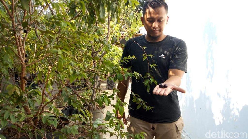 Pemuda Ponorogo Budidaya Anggur yang Berbuah di Batang, Penasaran?