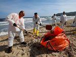Duh... Pantai Cantik di Prancis Diselimuti Minyak